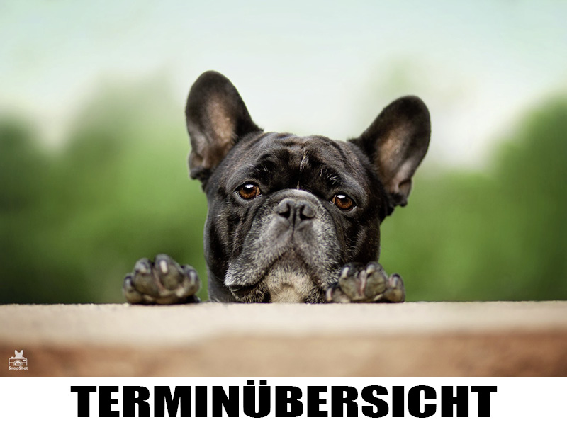 Terminübersicht BB SnapShot Hundefotografie in Kaiserslautern