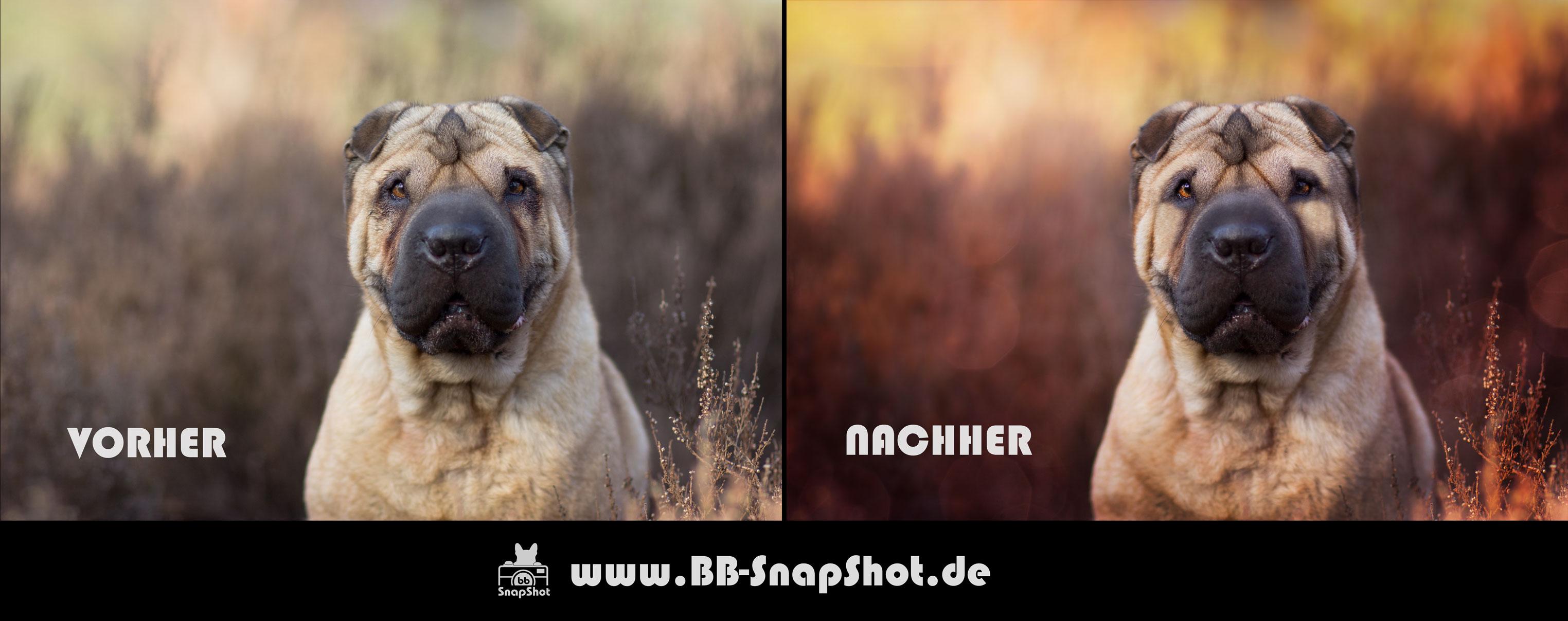 Bildbearbeitung BB SnapShot Hundefotografie in Kaiserslautern - Shar Pei Maja aufgenommen in der Mehlinger Heide im März