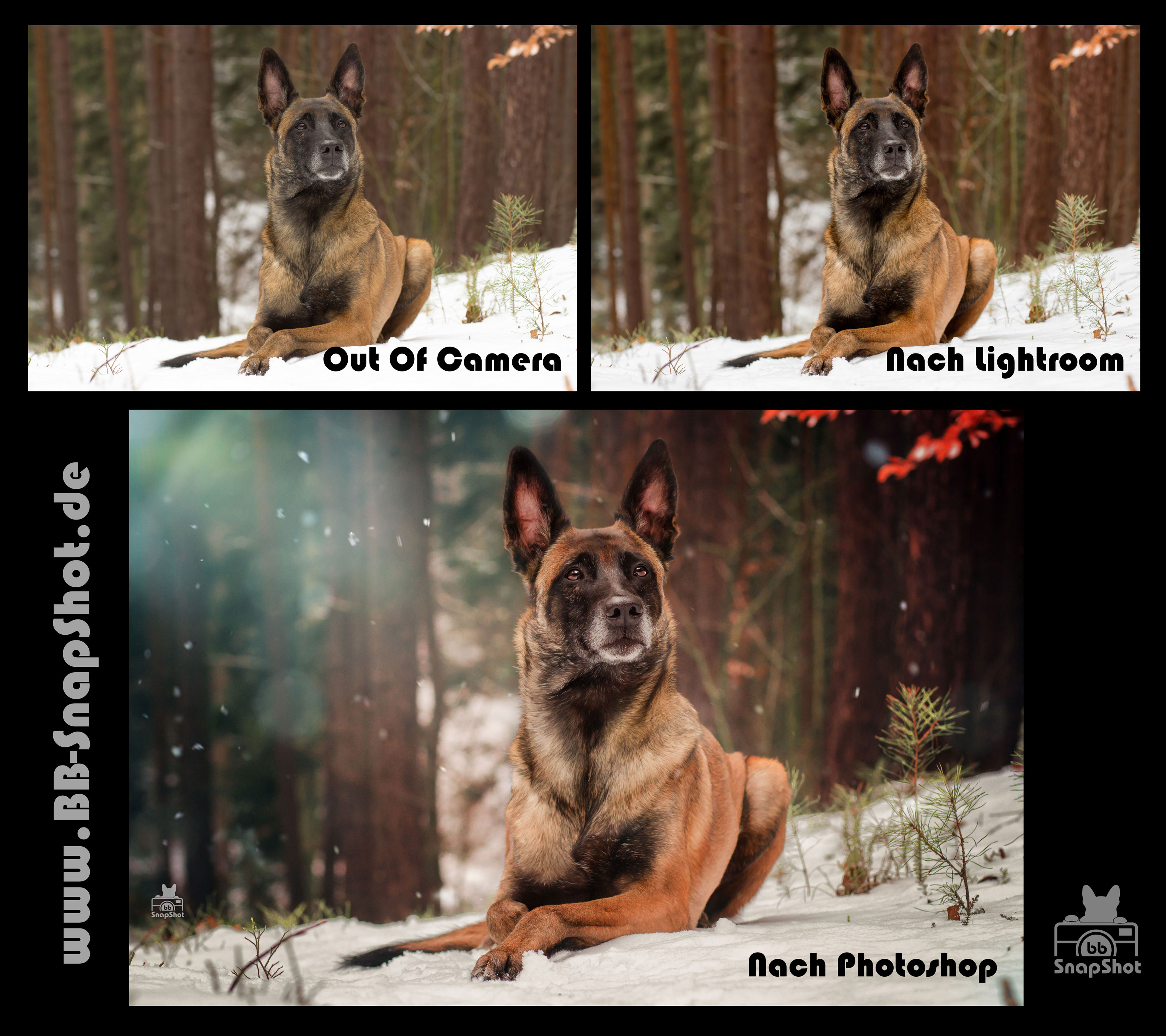 Bildbearbeitung BB SnapShot - Hundefotografie in Kaiserslautern Malinois Fly im Winter Wonder Land