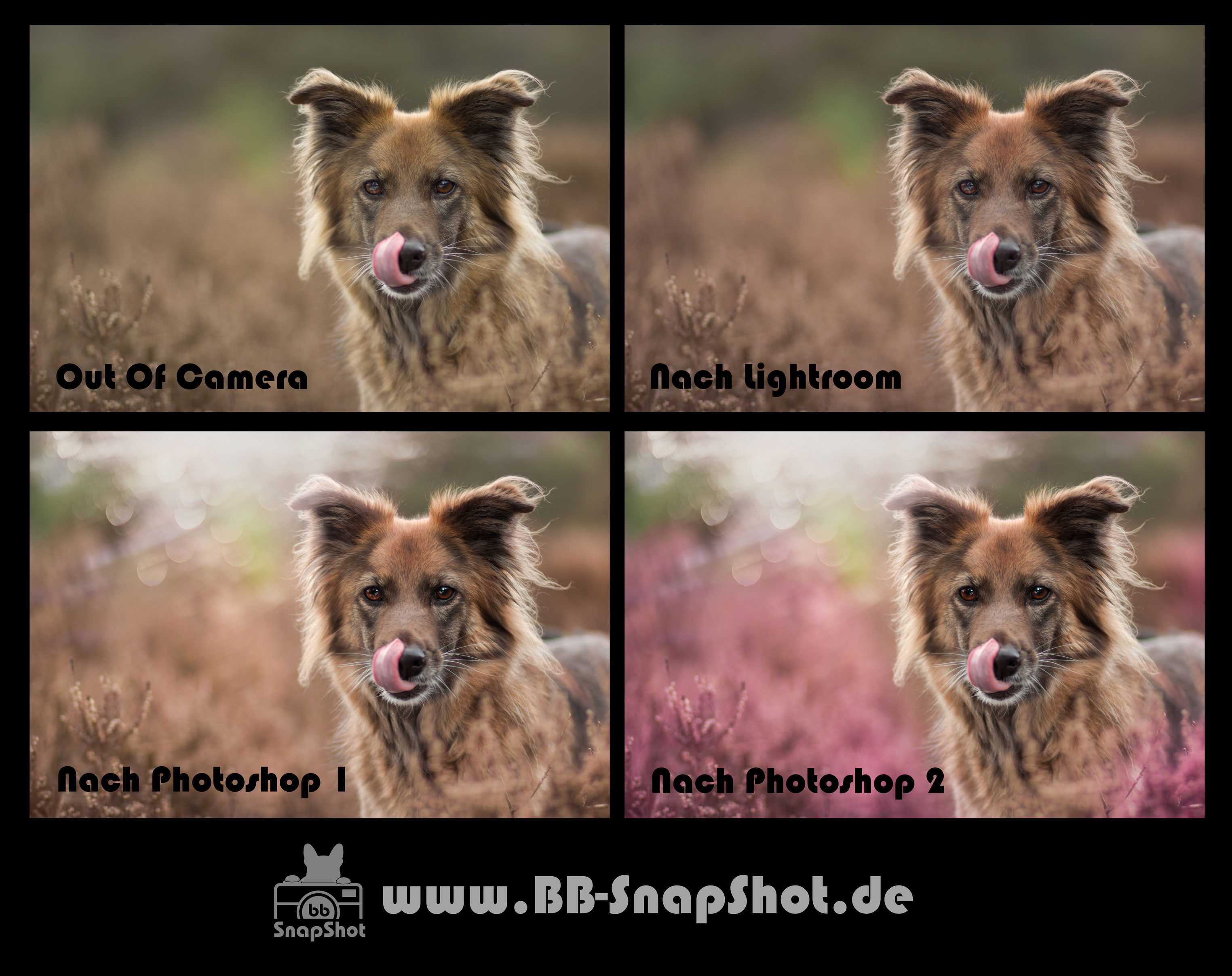 Bildbearbeitung BB SnapShot - Hundefotgrafie in Kaiserslautern Mischlingshund Aisha in der Mehlinger Heide